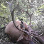 archery-wyoming-bull-with-salt-river-range-outfitters